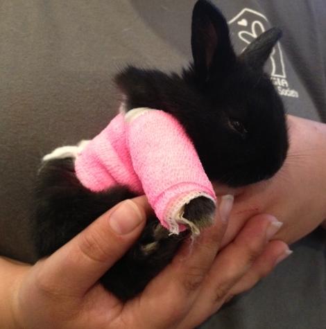 Gwinnett Bunny Rescue 1