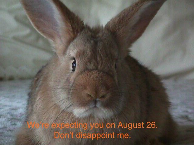 Jailbreak Bunny