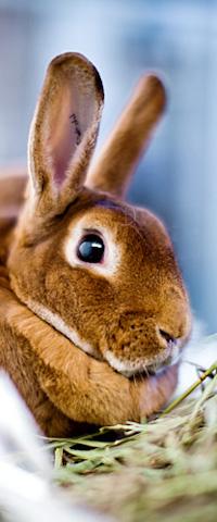 KHS sidebar-bunny
