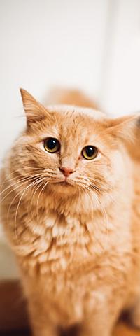 KHS sidebar-cat 2