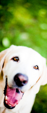 KHS sidebar-dog