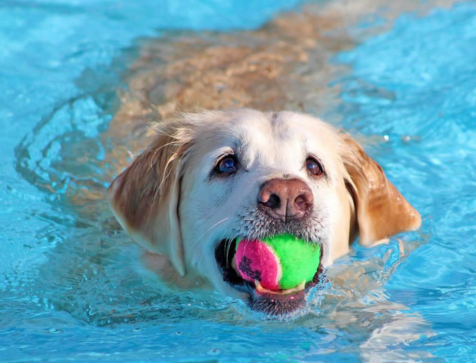 See Spot Splash 1