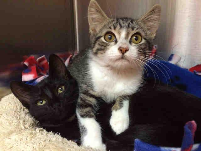 Pasadena cats