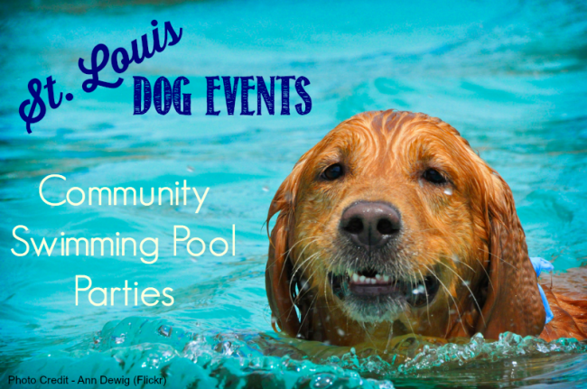 St Louis Dog swim-Ann Dewig Flickr