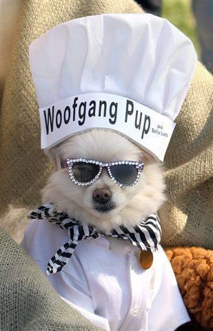 Bevo Mill Pet Parade wolfgang pup