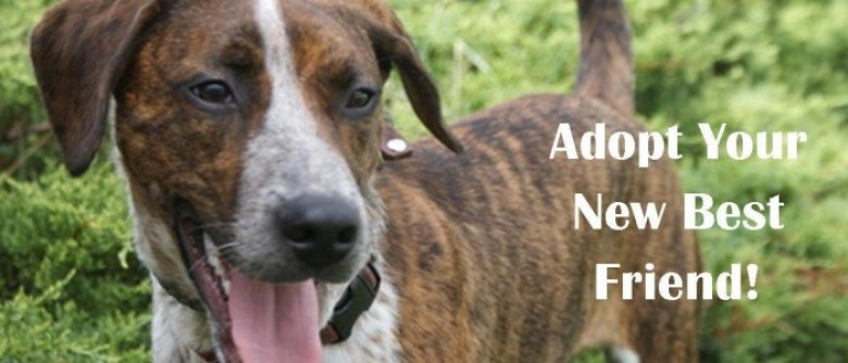Coming Home Rescue Adopt