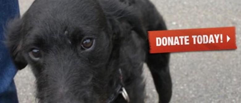 Coming Home Rescue donate