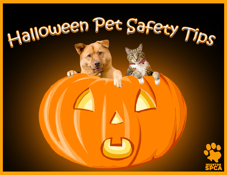 Halloween_Pet_Safety_Tips