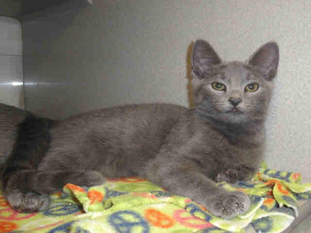 Wake SPCA cat 2
