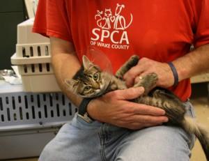 Wake SPCA with cat