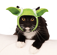 Yoda cat