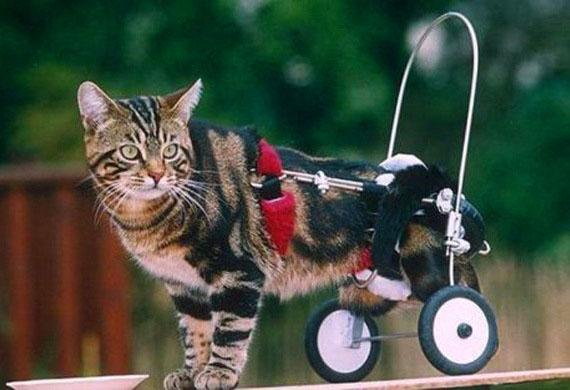 Photo courtesy of Council of Disabled Animal Friends
