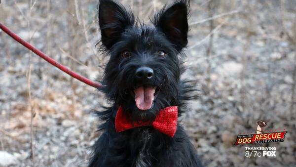dog_rescue_ASDR 2015