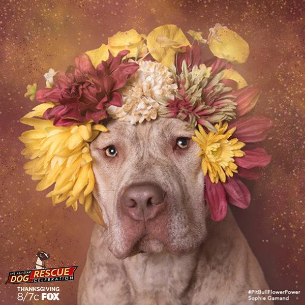 pitbulls & flowers