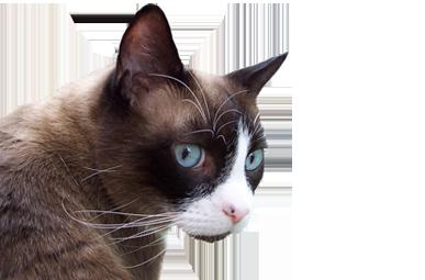 CNHS cat2
