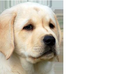 CNHS dog1