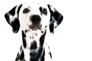 CNHS dog2