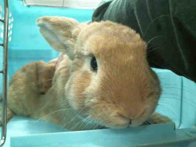 HS Utah bunny 1