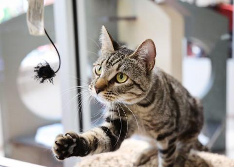 HS Utah cat 1