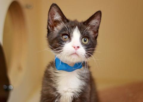HS Utah cat 2