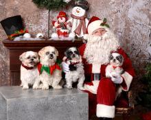 HSU Santa dogs