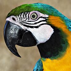 MHS bird