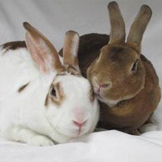 MHS bunnies