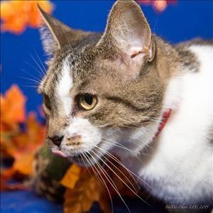 MHS cat