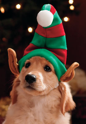 Christmas Hats For Dogs.Christmas Hats For Your Dog The Latest News From Petravelr Com