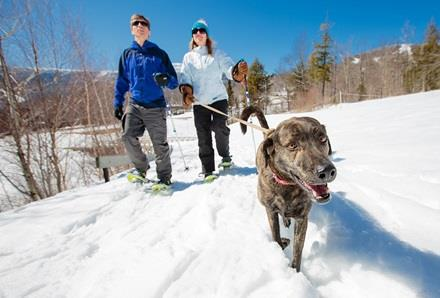 Stowe_Activities_Dog