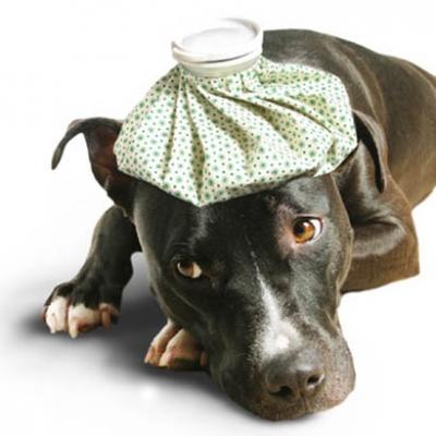 sickdog 1